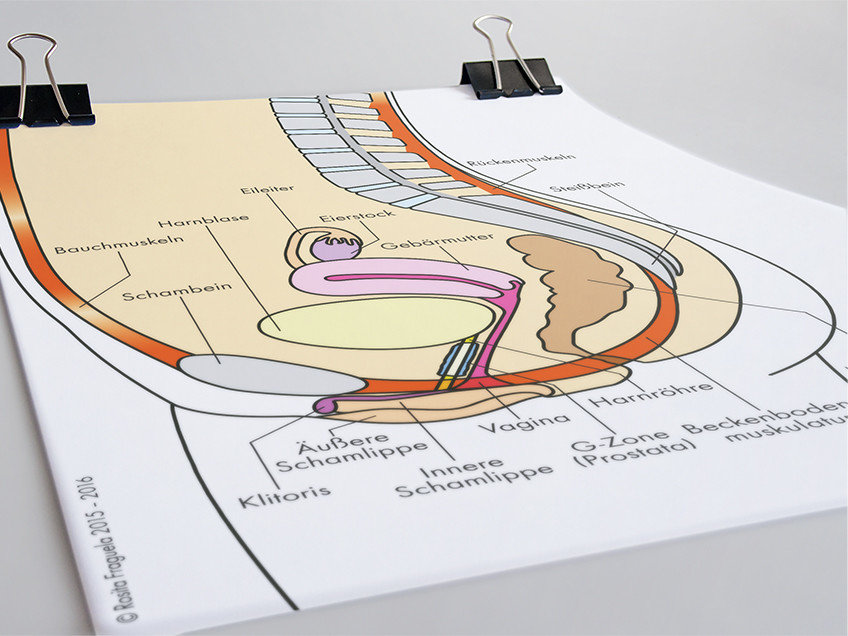 Eine übersichtliche Darstellung des weiblichen Beckenbodens